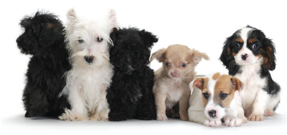 How Much Does Pet Insurance Cost?