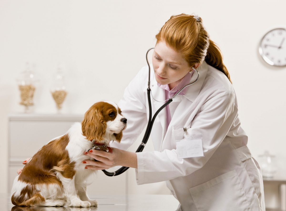 Why Are Online Vets so Popular?